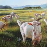 朝鲜名家油画 张海星《青青牧场》